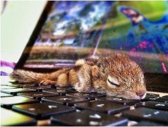 萌萌的小松鼠是人类的好朋友