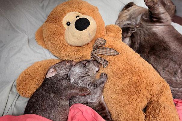 各种抱着毛绒玩具的小动物们…. 简直太可爱惹!