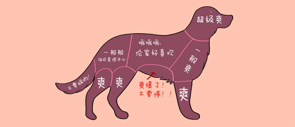 如何正确抚摸宠物 - gcq2012105 - 拱小二(5)班的博客