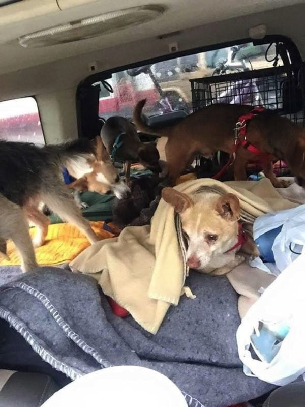 homeless-man-journeys-across-the-country-to-start-a-new-life-with-his-stray-dogs-10-photos-2-600x800