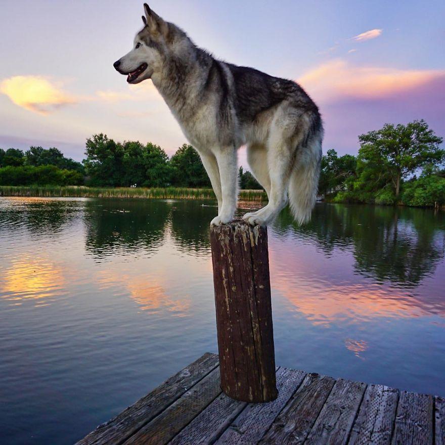 啊摇啊摇到你身边_小哥带着他的狼狗Loki翻山越岭去感受外面的世界 | 英国那些事儿