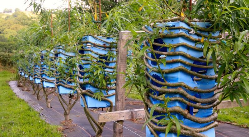 我春天种下一棵树,秋天就能种出好多好多桌子和椅子了