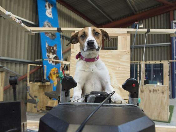 5-dogs-might-fly-1-OxfordScientificFilmsLtd