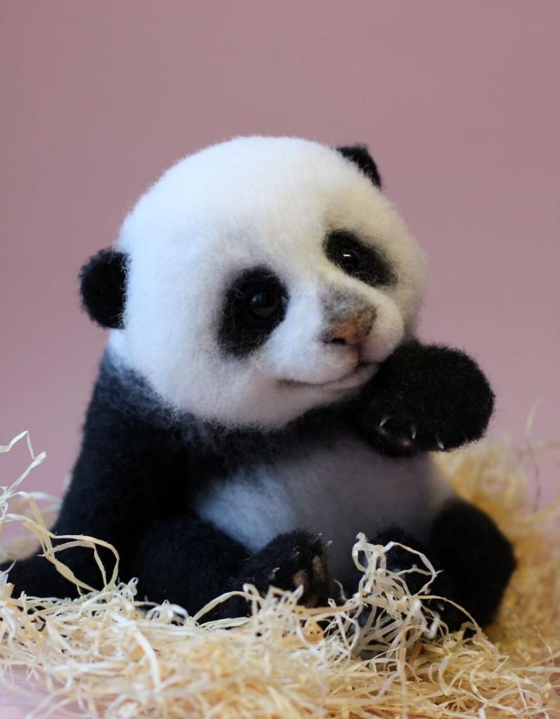 可爱的真熊猫图片