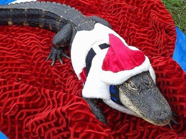 HT_pet_alligator_02_mm_160317_4x3_608
