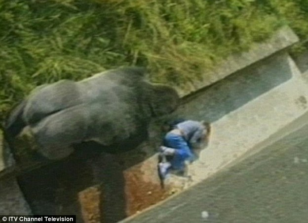 大几把插小屄_一个爬进围栏的3岁小男孩,逼它们杀死了这只刚过17岁生日的猩猩