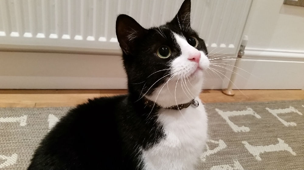 Black Cat Withe Blue Eyes