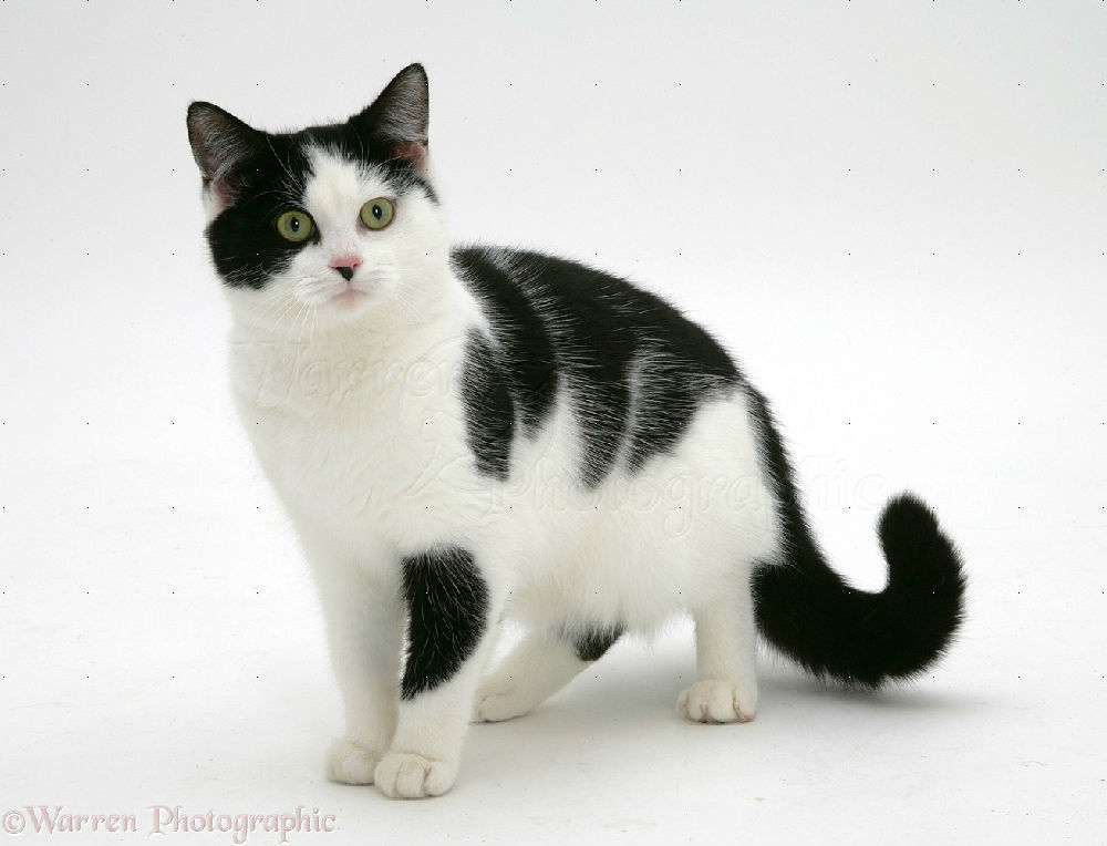 Black White And Gray Cat Names