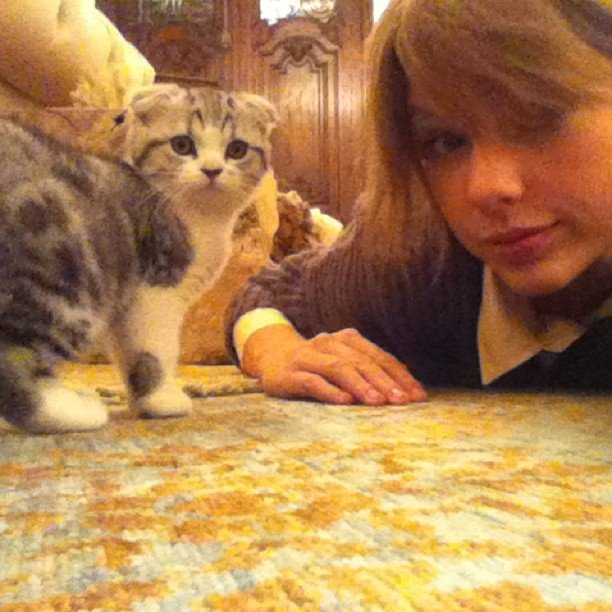 You-Wish-You-Were-Taylor-Swift-Cat
