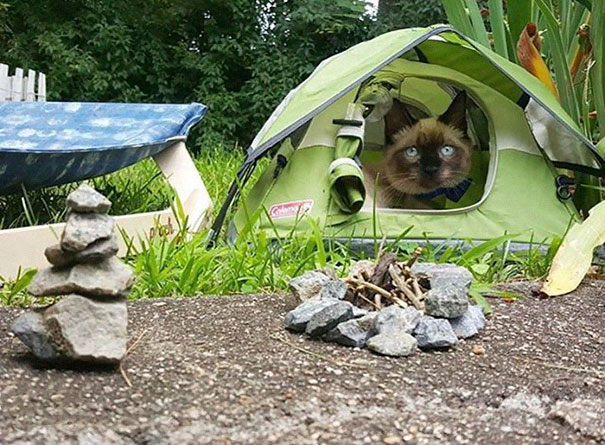 camping-with-cats-ryan-carter-03-5792243fab316__605