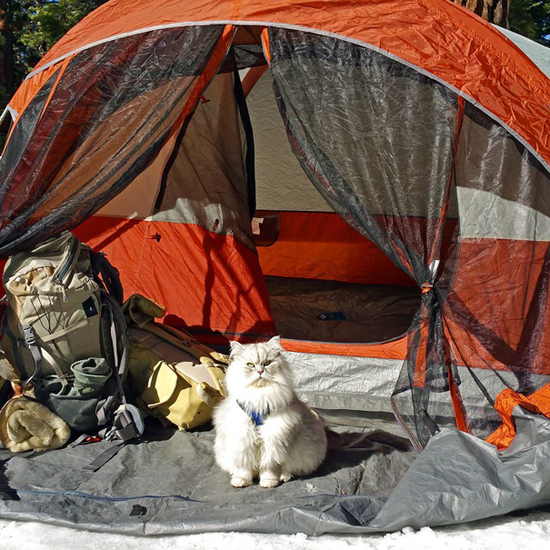 camping-with-cats-ryan-carter-31-57920146529c4__605
