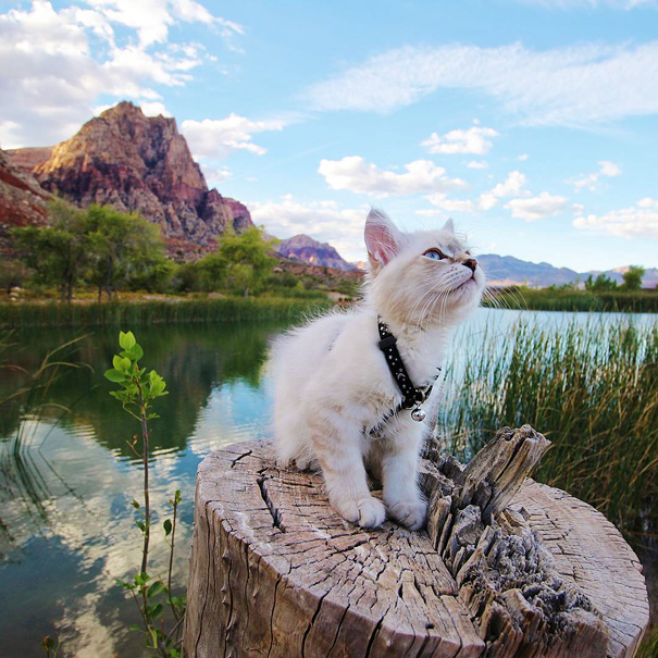 camping-with-cats-ryan-carter-34-5792014eda38e__605