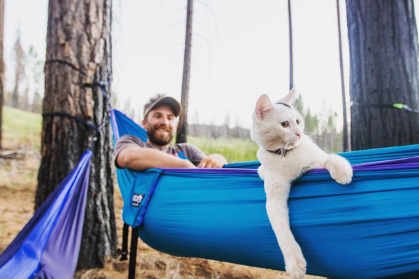 camping-with-cats-ryan-carter-5-57920100089db__605