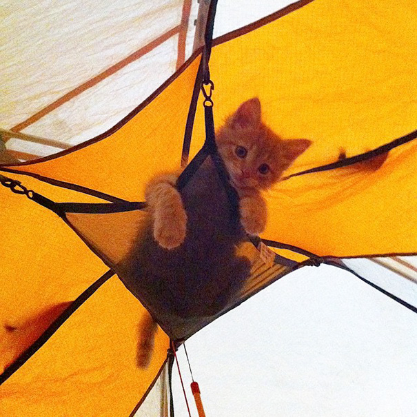 camping-with-cats-ryan-carter-63-57921c4b132d6__605