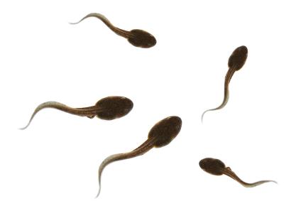 tadpoles-05