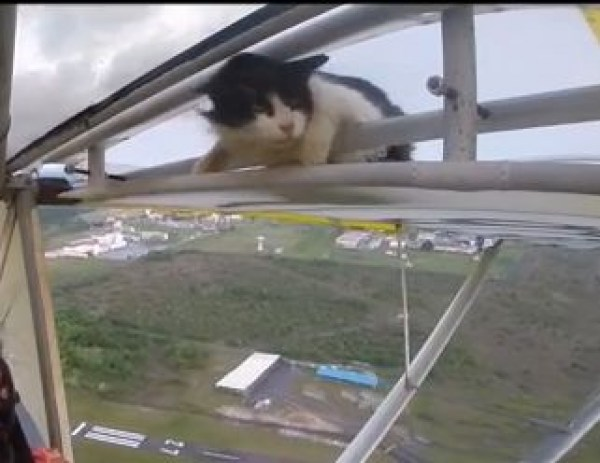 FireShot-Screen-Capture-317-Remove-cat-before-flight-YouTube-www_youtube_com_watch_vJ_8mdH20qTQ
