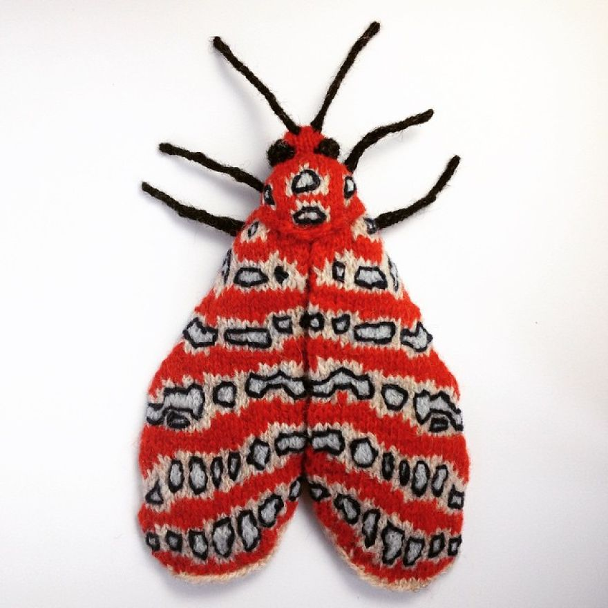 Spectacular-hand-knitted-moths-58ad413c52229__880
