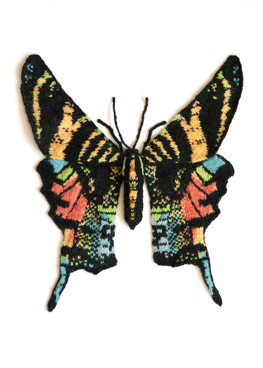 Spectacular-knitted-moths-made-from-shetland-wool-58ac015684f33__880