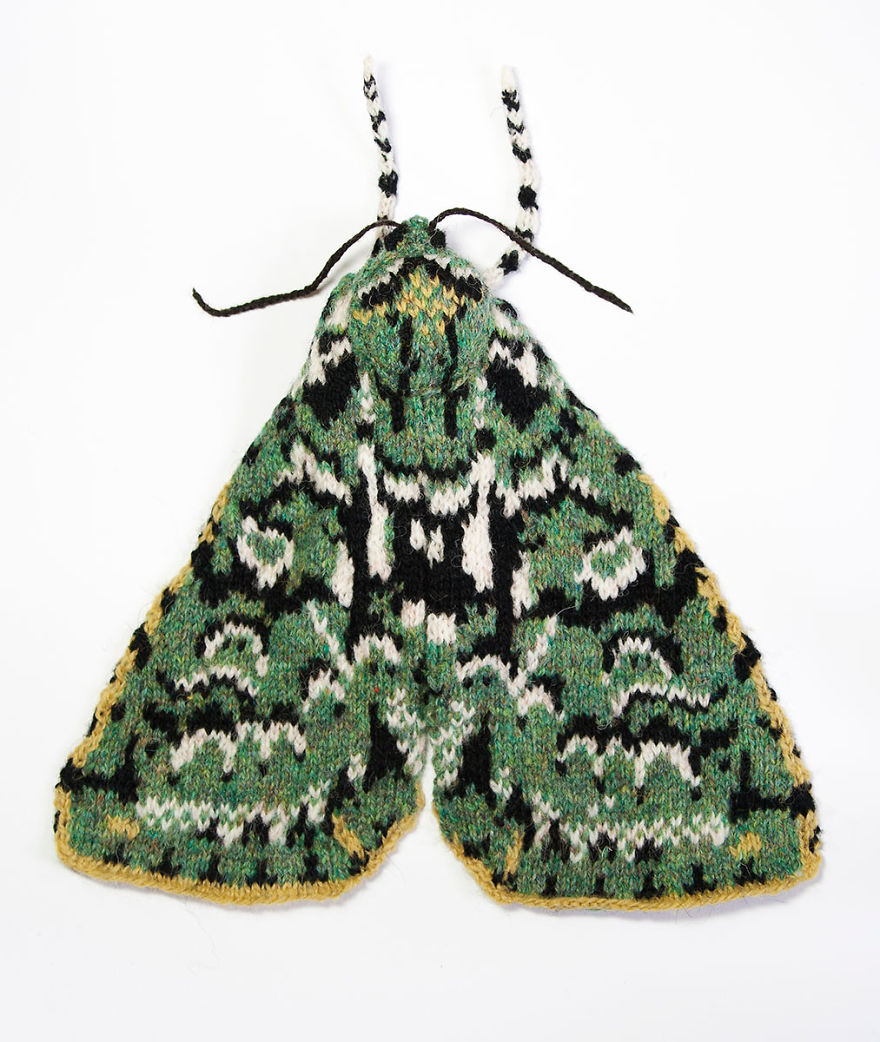 Spectacular-knitted-moths-made-from-shetland-wool-58ac018a1bc66__880