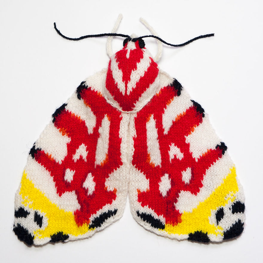 Spectacular-knitted-moths-made-from-shetland-wool-58ac01d45a025__880