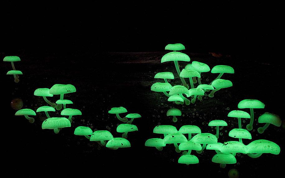 fungi-mushrooms-photography-steve-axford-8