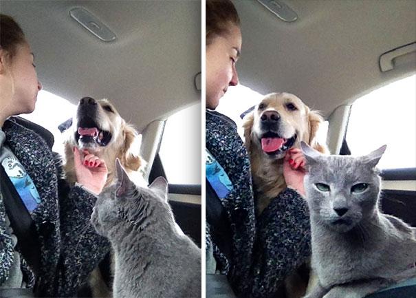 funny-dramatic-cats-101-58f76e1d895a4__605