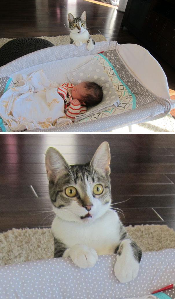 funny-dramatic-cats-12-58f72a98d5974__605