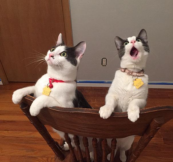 funny-dramatic-cats-13-58f72b46a0ecc__605