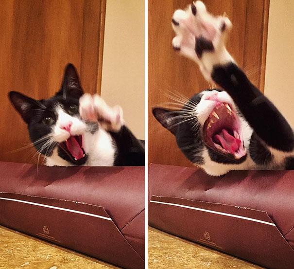 funny-dramatic-cats-24-58f763e2c981f__605