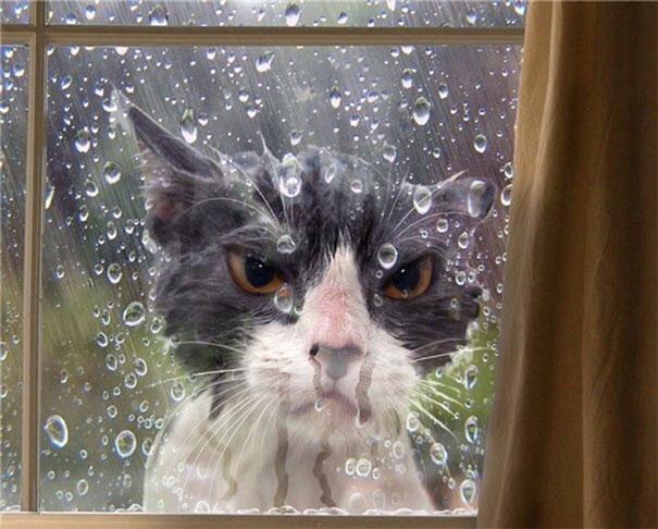 funny-dramatic-cats-26-58f765ec94b43__605