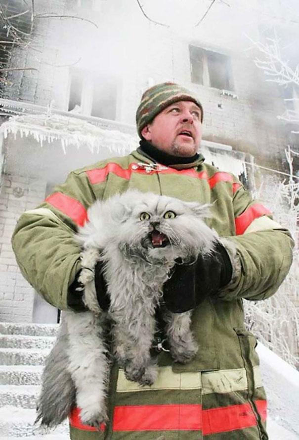 funny-dramatic-cats-34-58f85375c3b2d__605