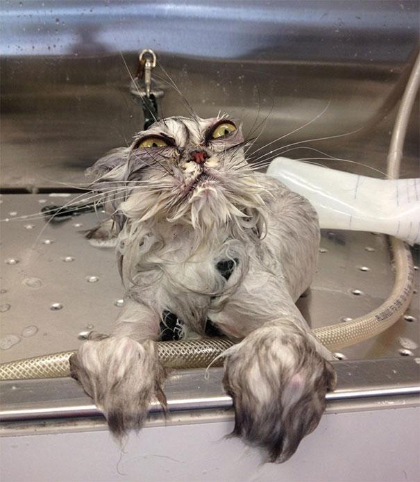 funny-dramatic-cats-7-58f72382ba3aa__605
