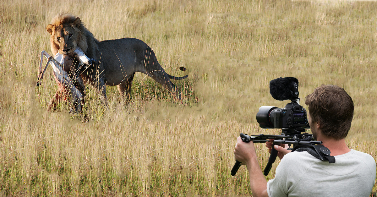 wildlife-cameraman