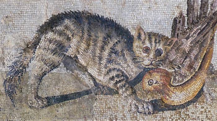 《科学》杂志一篇文章通过研究200多只猫的dna,发现猫