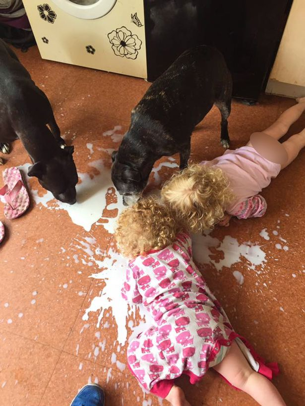 PAY-MUM-PUTS-KRAY-TWIN-TOTS-UP-FOR-SALE-AFTER-SNAP-CATCHES-THEM-LICKING-SPILT-MILK-OFF-FLOOR-WITH-DOGS (1)