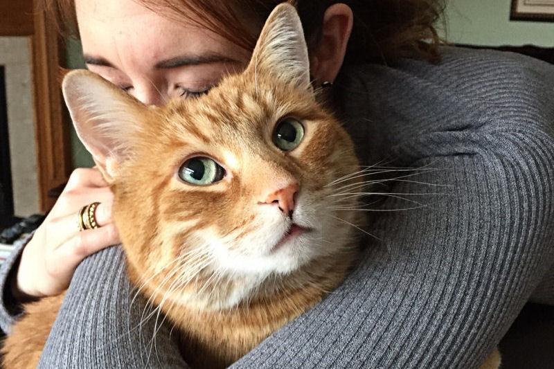 除了胖,你还应该知道的关于橘猫的9件事儿…. | 英国那些事儿