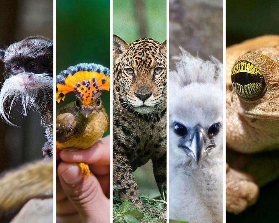 jungle-animals