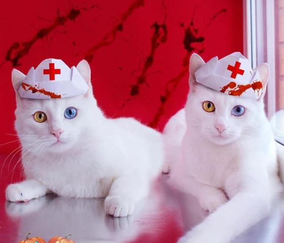 它们可能是全世界最美最仙气的双胞胎喵!纯白无瑕的毛