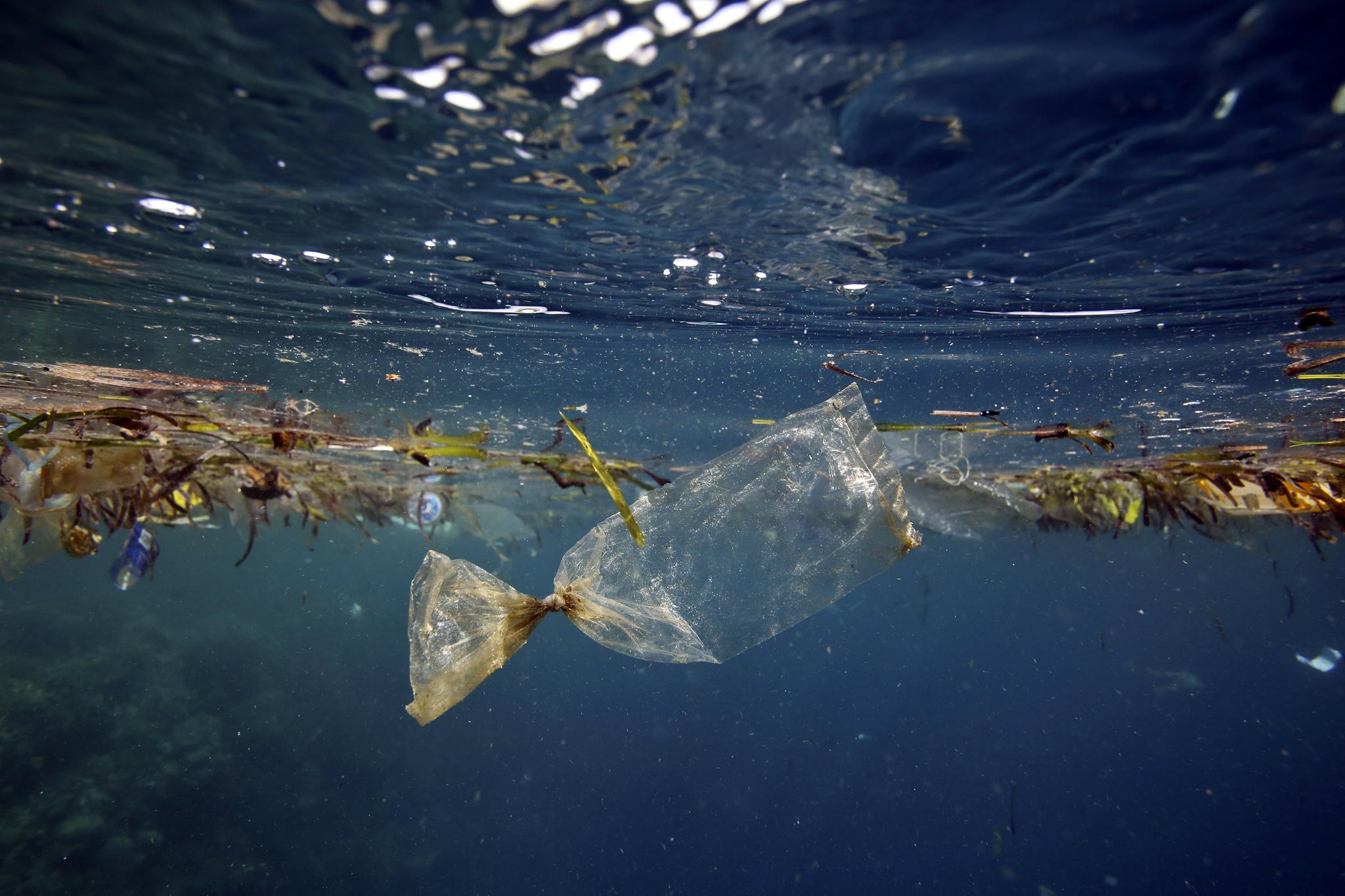Plastic bag floating underwater at Pulau Bunaken