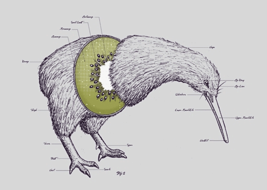 kiwi_bird_fruit