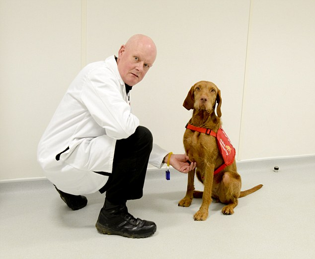 rob harris the trainer and midas the dog testing urine samples (hungarian wirehaired vizsla)