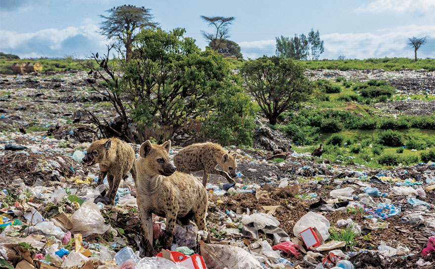 plastic-crisis-impact-on-wildlife-national-geographic-june-issue-cover-7-5afd84c063ede__880