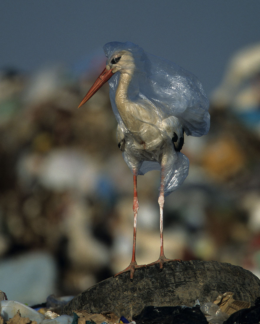 plastic-crisis-impact-on-wildlife-national-geographic-june-issue-cover-9-5afd83f808949__880
