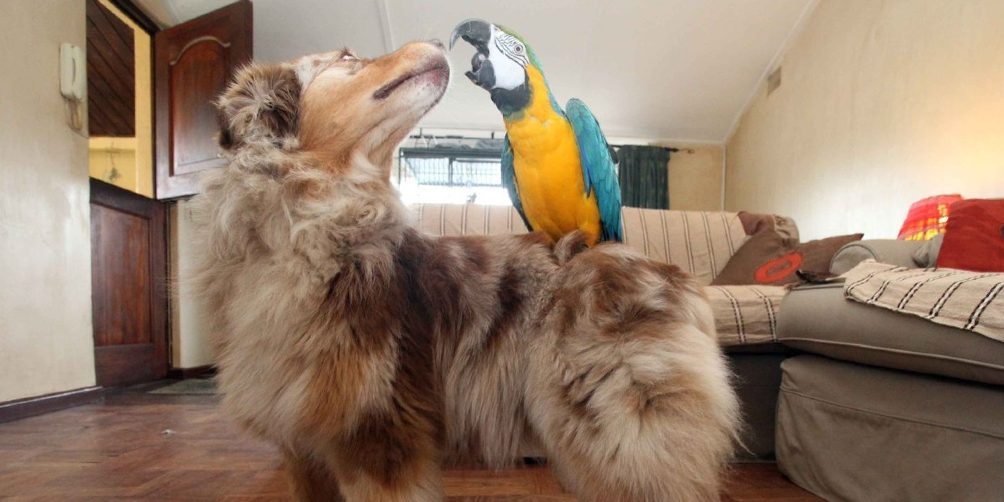 o-ANIMAL-FRIENDS-DOG-PARROT-facebook