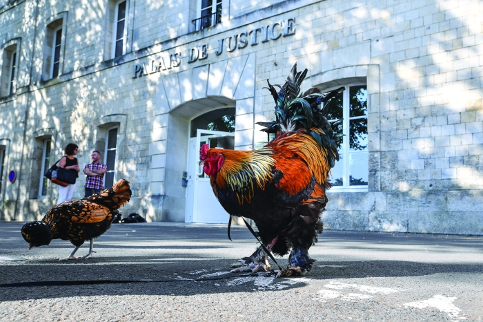 Two roosters stand outside the high court (Tribunal de Grande Instance) in Rochefort, western France, on Thursday. (AFP)