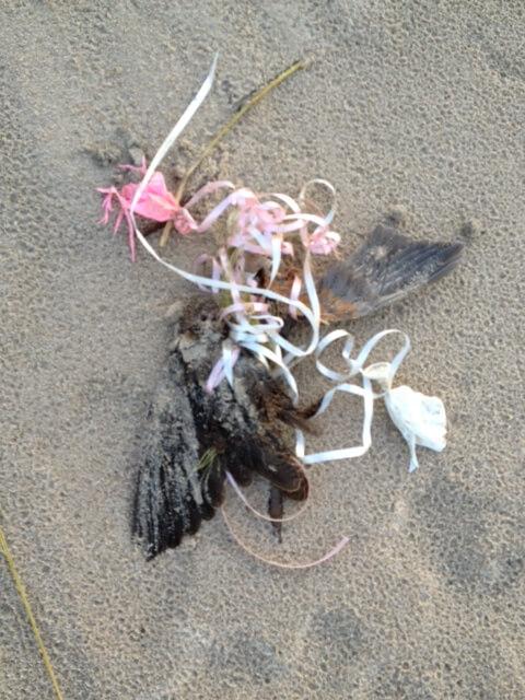 Rusty-blackbird-killed-by-latex-balloons1