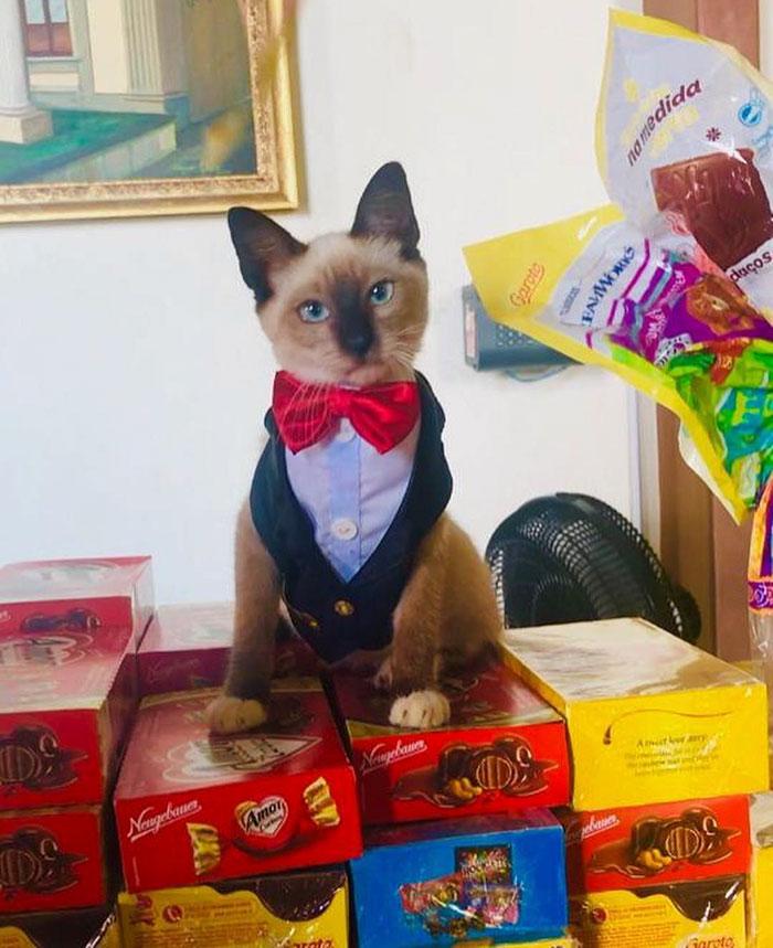 homeless-cat-hired-employee-dr-leon-advogato-15-5d88a9ba160cc__700