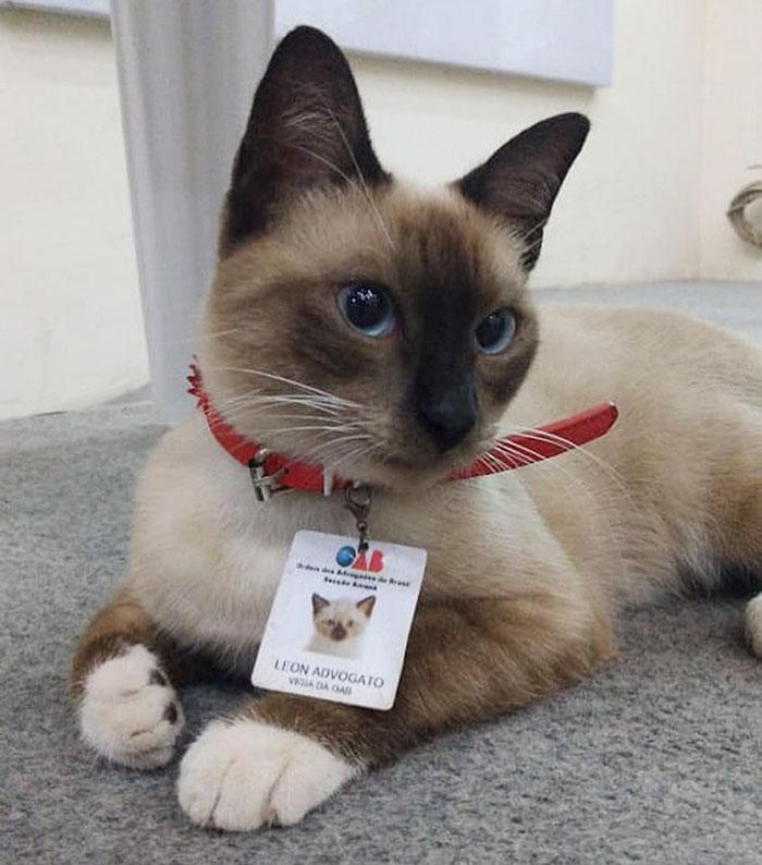 homeless-cat-hired-employee-dr-leon-advogato-22-5d88a9c8edbad__700
