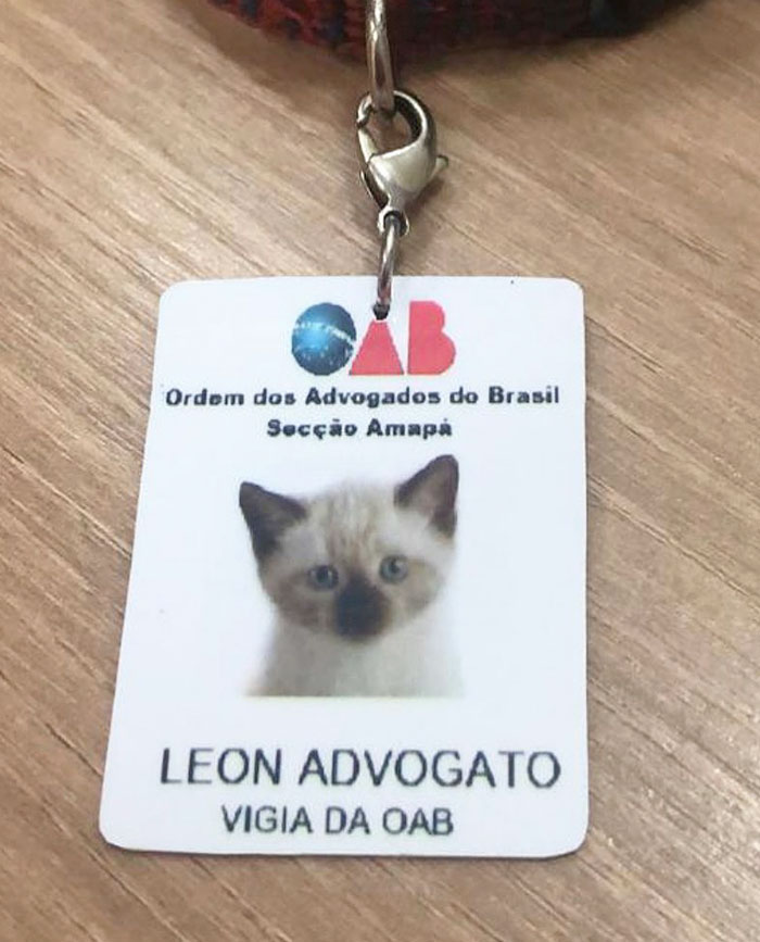 homeless-cat-hired-employee-dr-leon-advogato-5-5d88a9a407947__700