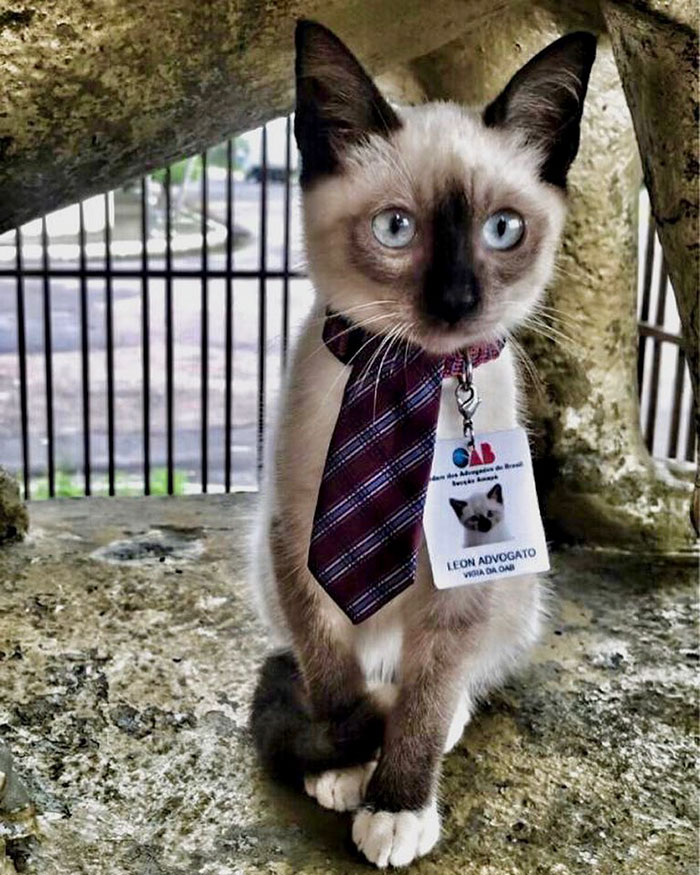 homeless-cat-hired-employee-dr-leon-advogato-8-5d88a9aa14849__700